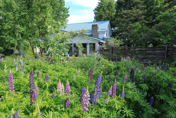 Glen Elbe Learning & Experience Centre, Lupin Garden