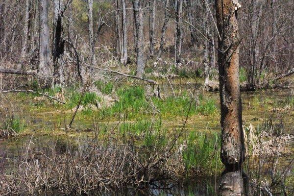 Fosters Creek