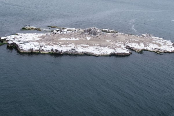 Gull-Island2